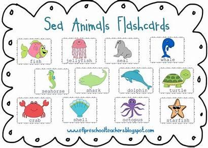 Animals Sea Water Clipart Names Ocean Preschool