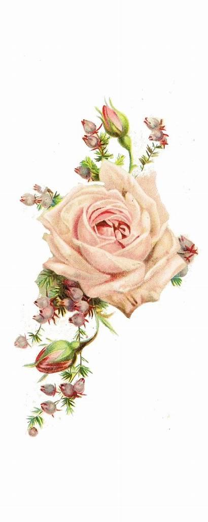 Rose Roses Flowers Flower Antique Paper Shabby