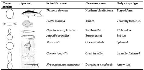 biodiversity  morphology