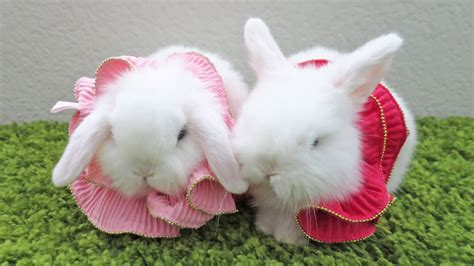 Baby Animals Wallpapers Free - baby rabbit wallpapers baby animals