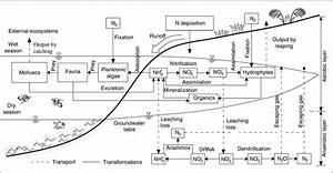 Nitrogen Cycle In The Hyporheic Zone Of Natural Wetlands