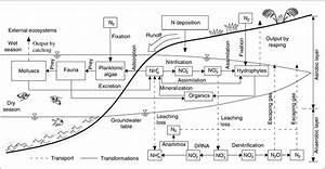 The Nitrogen Cycle Diagram Freshwater Wetland