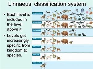 Vertebrate Taxonomy Chart