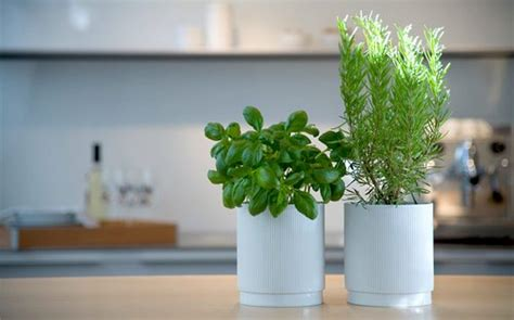 Plants For Bathroom Counter by Indoor Growing Plants Www Coolgarden Me