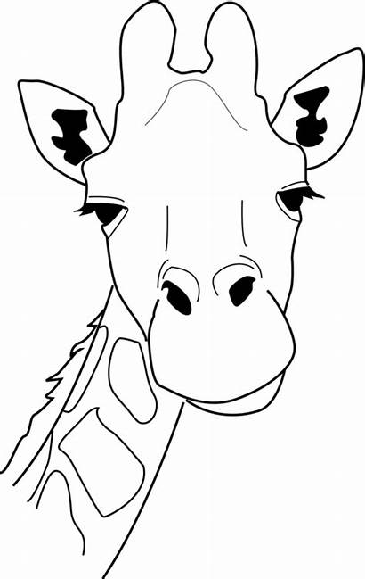 Giraffe Outline Line Drawing Clipart Head Cliparts