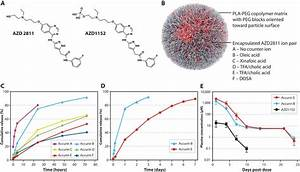 Aurora Kinase Inhibitor Nanoparticles Target Tumors With