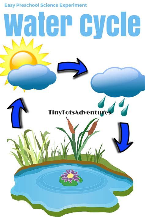 easy preschool science experiment water cycle cycle 768 | 0fc7aa52515ed7a9959ac33643519ad4 preschool science experiments water experiments