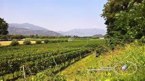 italy vineyards background