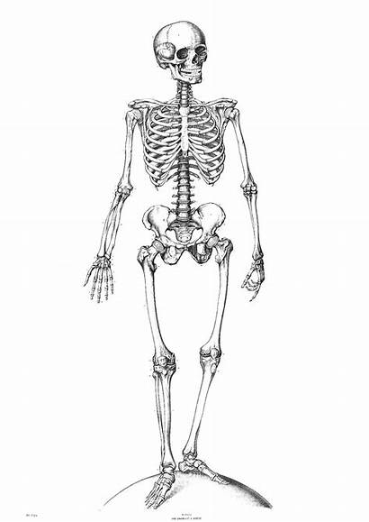 Skeleton Coloring Pages Printable