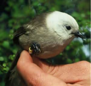 Small Bird with White Head