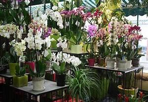 Cache Pot Orchidée : orchidee deux tiges florales ~ Teatrodelosmanantiales.com Idées de Décoration