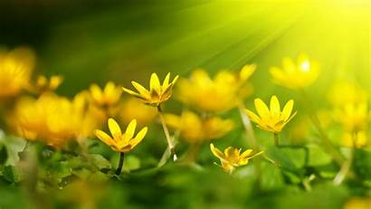 Yellow Flowers 1080p Wallpapers