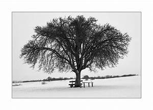 Tischläufer Schwarz Weiß : schwarz wei foto bild jahreszeiten winter natur bilder auf fotocommunity ~ Frokenaadalensverden.com Haus und Dekorationen