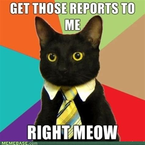 Cats Meme - business cat casual possibly nonsensical ramblings