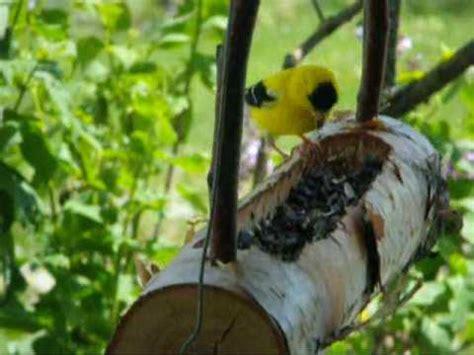 remplir les mangeoires des oiseaux youtube