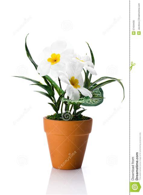 marguerite artificielle dans le pot de fleur image stock image 57434435