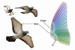 A New Robotic Pigeon Can Bend Its Wings Like A Real Bird
