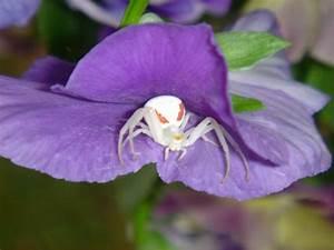 Weiße Spinne Deutschland : spinnentiere weisse spinne die besten 100 bilder in vielen kategorien ~ Orissabook.com Haus und Dekorationen