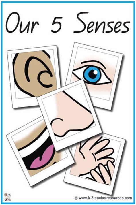 43 our 5 senses vocabulary words