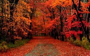 hello autumn on Tumblr