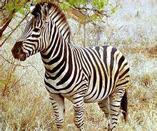 gambar zebra indonesiadalamtulisan terbaru