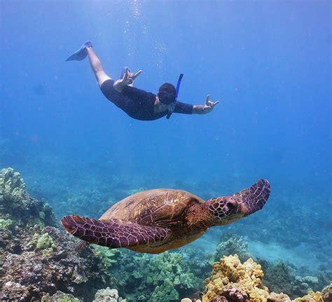 molokini snorkeling molokini turtle town tour malolo super fun