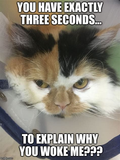 angry cat meme imgflip why vanny woke tagged