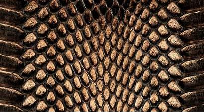 Snake Skin Snakeskin Wallpapers Animal Crocodile Reptile