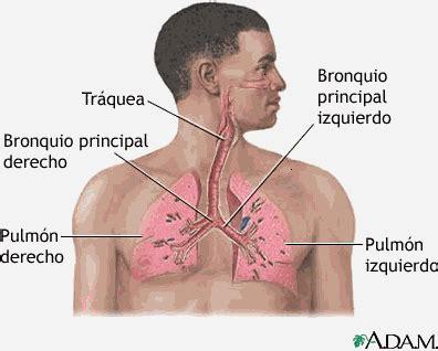 enfermedades respiratorias tipos de enfermedades