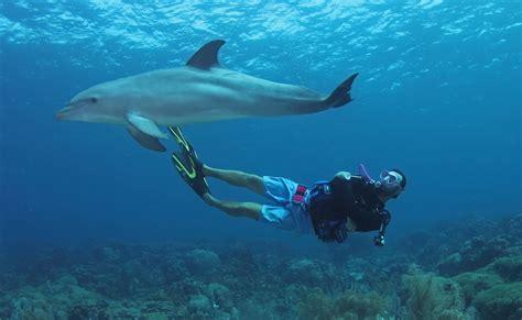 Ocean Encounters Curacao - Dolphin Dive Curacao