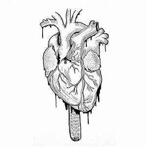 Heart Organ Drawing At Getdrawings