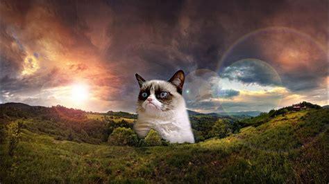 Grumpy Cat Meme Hd Wallpaper