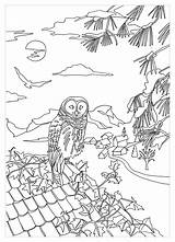 Coloring Roof Owl Owls Adult Own Pages Marion sketch template