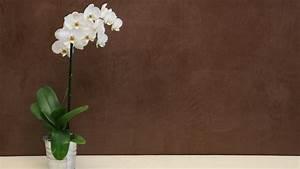 Cire Pour Enduit : tout savoir sur le b ton cir d coratif ~ Premium-room.com Idées de Décoration