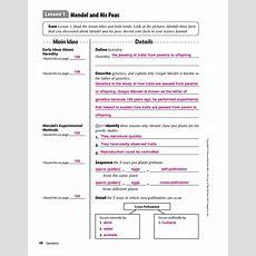 Answers For Mendel Worksheets 44 Simplebookletcom