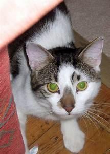 Katze Kotzt Viel : wir in winden wer gibt kater tom zu viel futter ~ Frokenaadalensverden.com Haus und Dekorationen