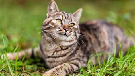 Why Does My Cat Eat Faeces?