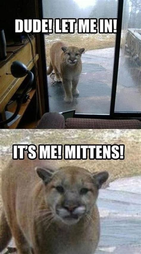 Funny Animals Meme - funny animal memes funny animal memes animal pictures with captions lolcats pins n giggles