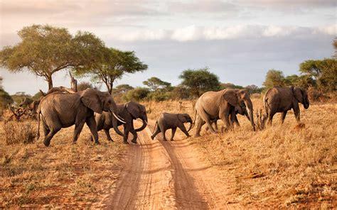 How to prepare for a safari in Tanzania - Foreign policy