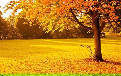 Fall Backgrounds Yellow by 25 Autumn Wallpapers Backgrounds Images Pictures