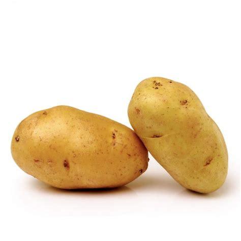 pomme de terre en chambre plants de pommes de terre bio nicola