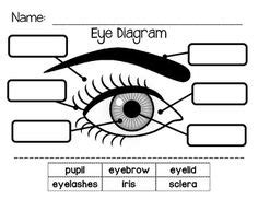 diagram  eye  images science experiments kids