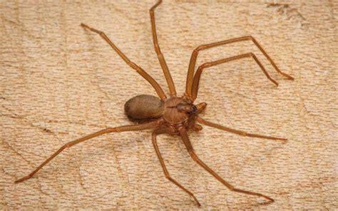 araignee dans la maison pourquoi les araign 233 es rentrent dans la maison