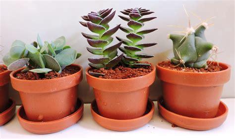 adorno  cocina plantas miniatura cactus suculentas  en mercado libre