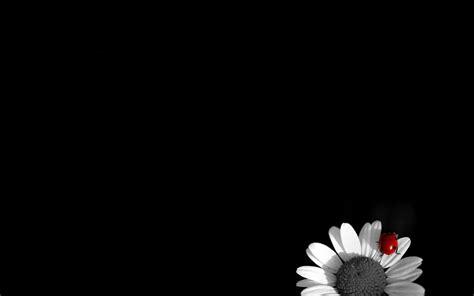 fond decran noir  blanc