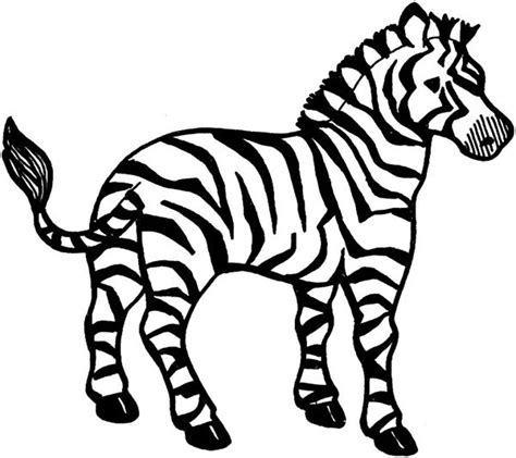 Wild Animal Coloring Pages African Zebras Page