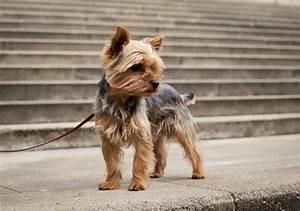 Dogs Bite Decatur Al: PALM COAST FL - A 79-YEAR-OLD MAN ...