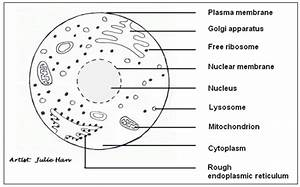 Liver Cell Labeled Diagram