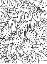 Strawberry sketch template