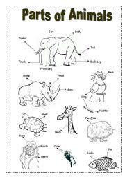 parts  animals picture dictionary esl worksheet
